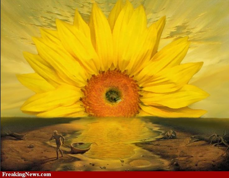 Dali Sunflower pictures