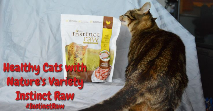Healthy Cats with Nature's Variety Instinct Raw #InstinctRaw