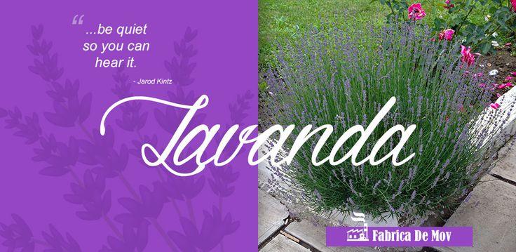 http://fabricademov.ro/wp-content/uploads/2015/11/14-lavanda.jpg