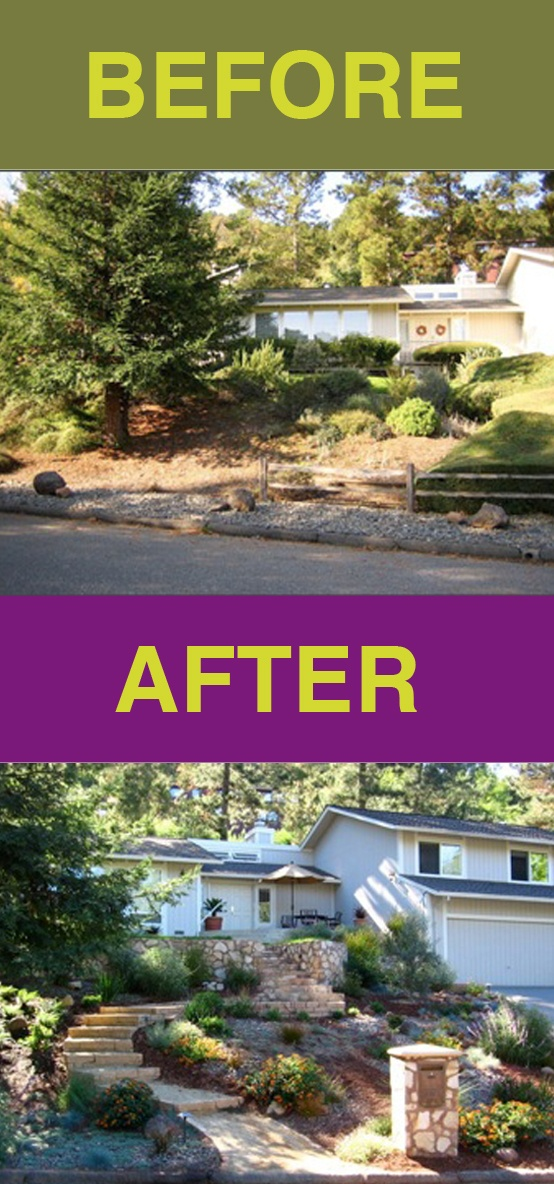 From a dated 50's look .... ... to a contemporary landscape with drought tolerant, deer-resistant plants and curving step-stone path to street. #Before #After #PlannedLand