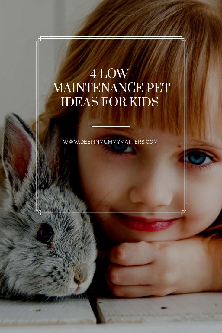 4 lowmaintenance pet ideas for kids mummy matters in