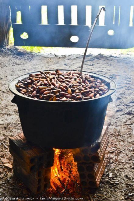 Pinhão: semente da Araucária, o pinheiro típico da região sul do Brasil. Este servido na Serra Catarinense. Saiba mais >>> http://www.guiaviagensbrasil.com/blog/neve-na-serra-catarinense-um-programa-diferente-tipicamente-nacional/