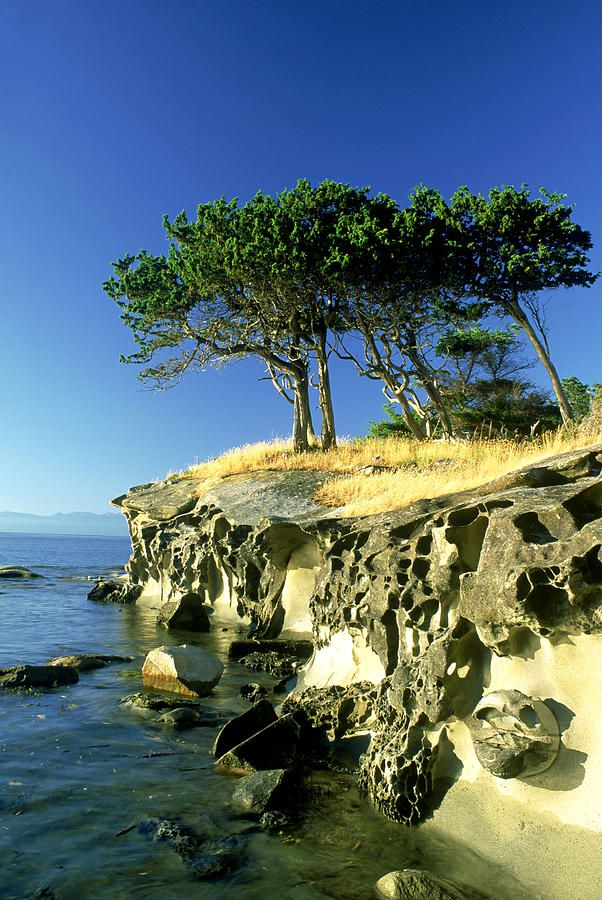 Trees on tafoni sandstone islet near Gabriola Island, BC by David Nunuk