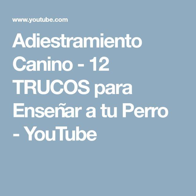 Adiestramiento Canino - 12 TRUCOS para Enseñar a tu Perro - YouTube