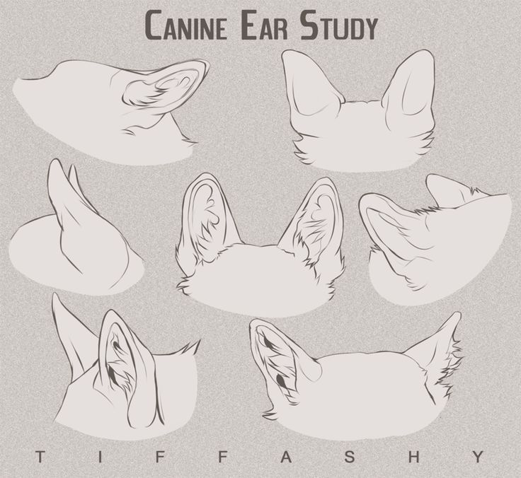 Canine Ear Study Tutorial Animal Drawings Animal Sketches Dog Anatomy