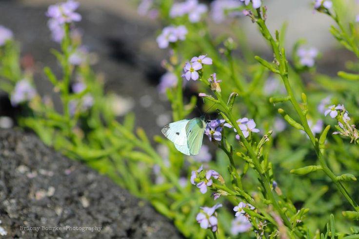 Butterfly  #butterfly #beach #walk #nature #love #adventure #explore #travel…