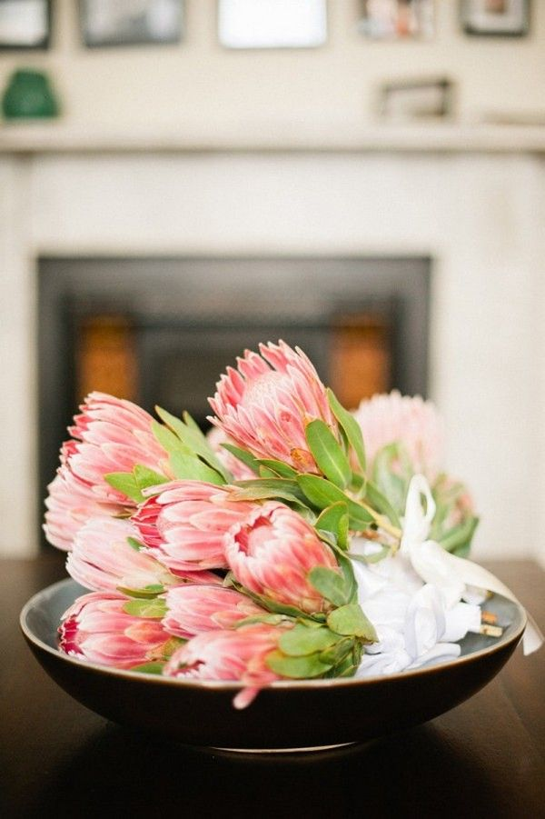 I'm obsessed with Protea, which are native to South Africa. My favorite flowers are tulips and lotuses, and this flower is like a beautiful meeting of the two!   Protea...   Te gustaría aprender todo sobre las flores, visita www.imtf.com.mx