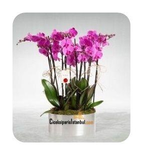 Krom galvaniz içinde 5 adet çift dal toplamda 10 dal fuşya renk orkide çiçek gurubu.