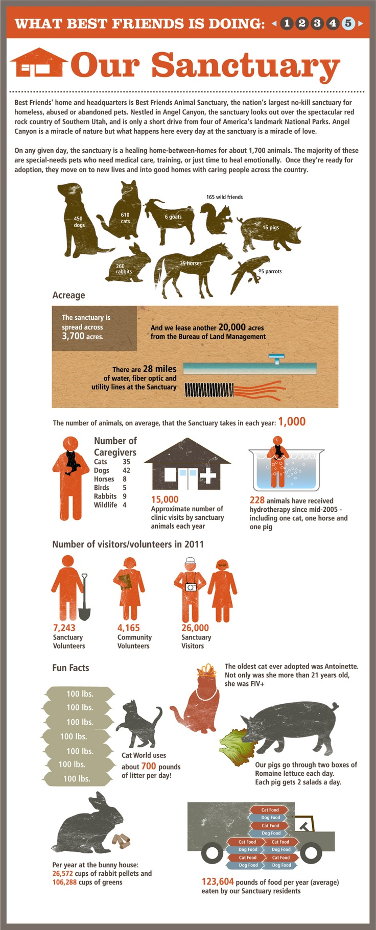Best Friends Animal Society tells their story with an infographic series