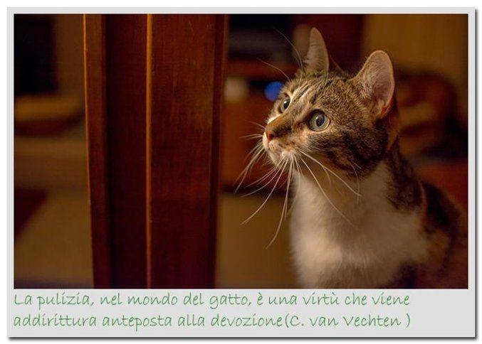 La pulizia nel mondo del gatto è una virtù...