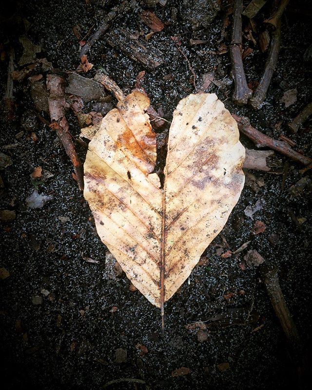Photography by Frank Brandwijk I 'Leaving Autumn' 'Spring is in the Air' 'Leaf Love' 'Nature'