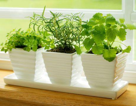 Lovely Gardening With Herbs 101: Where To Begin. Indoor HerbsIndoor  GardeningContainer ...