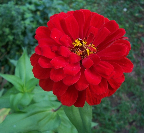 Find This Pin And More On Cut Flower Red
