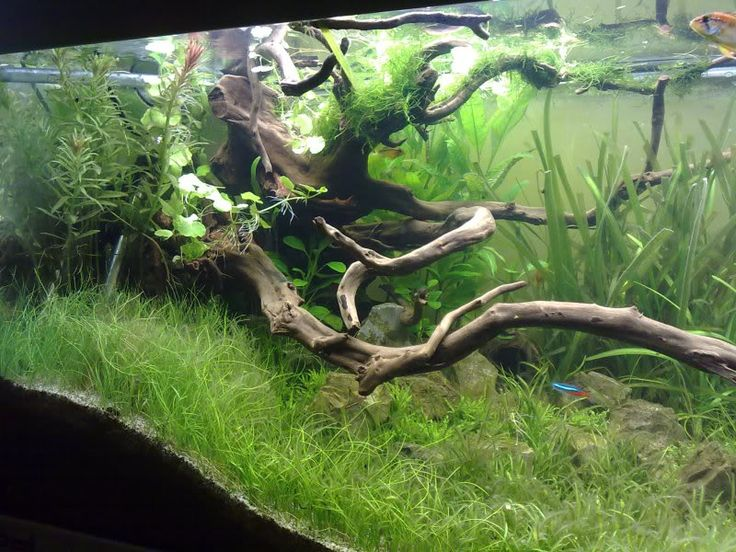 31 best images about aquascape biotope inspiration on for Amazon fish tanks