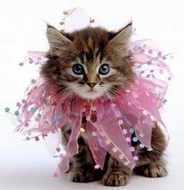 Cutest kitten! <3