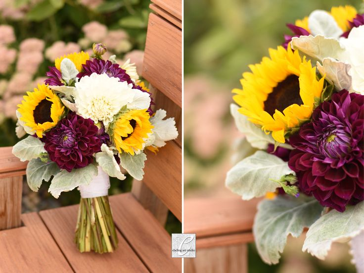 Sunflower & burgundy dahlia bridal bouquet with white dahlias, and dusty miller greenery. Perfect for an Autumn wedding!