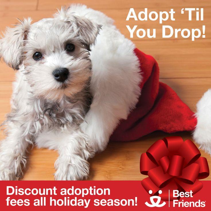 Adopt Near You Pets Adoption Dog Growling