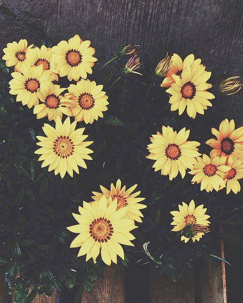 100 Tumblr Summer FlowersYellow