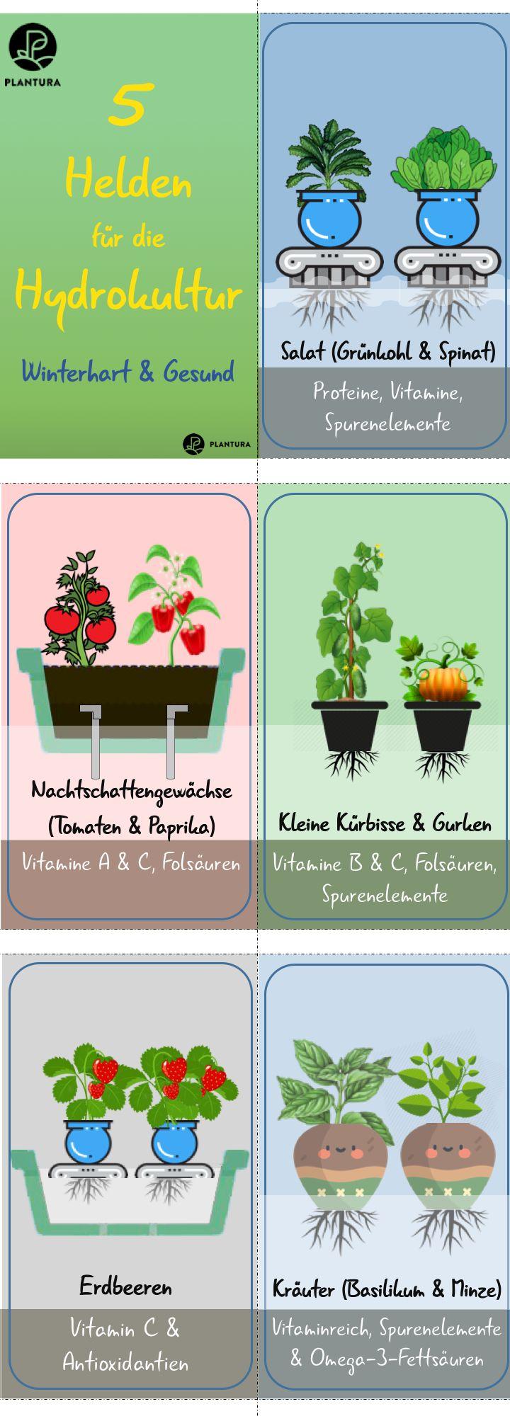 Kräuter in Wasser anbauen: Unsere Top 7 – Plantura | Garten Ideen & Tipps | Gemüse, Obst, Kräuter