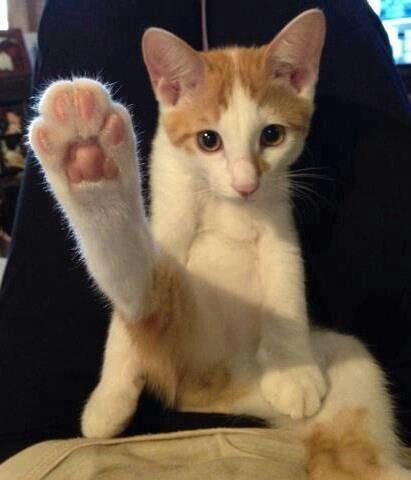 Ninjer kitteh send a foot to yer face!!