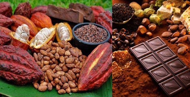 El Cacao Beneficios y Propiedades para la Salud