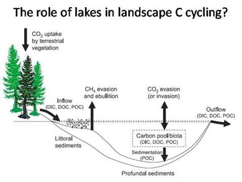 an experiment on the ecosystem of the lake Key words: arthropod community collembola cross-ecosystem movement  detrital food  experiment heathland iceland lake-to-land subsidy midges  mites.