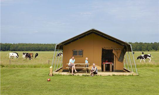 [b]Camping[/b] - FarmCamps 't Looveld: safaritenten tussen de koeien