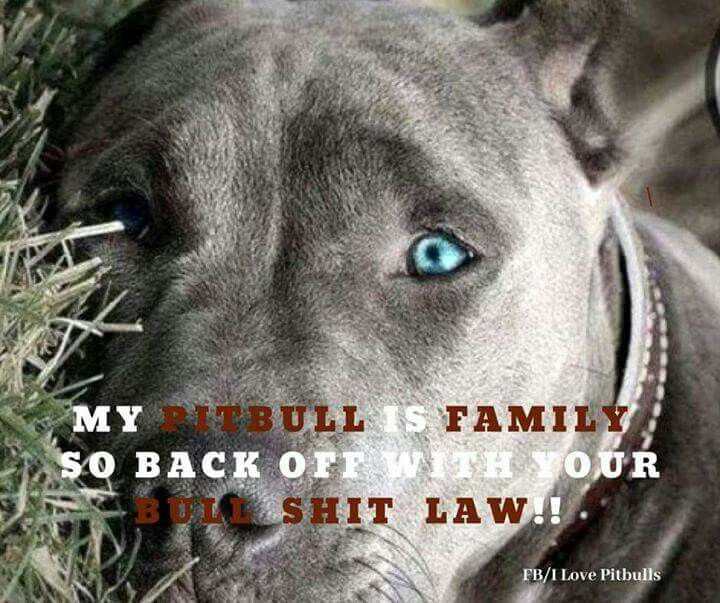 Pin By Sarah Schlesier On Doggie Stuff Dog Words Pitbull
