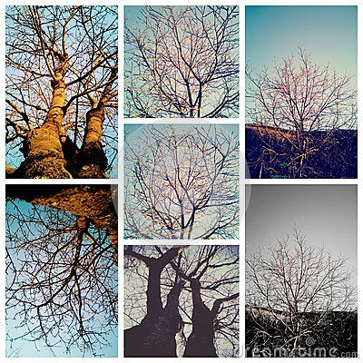 Trees collage in winter with out leaves.