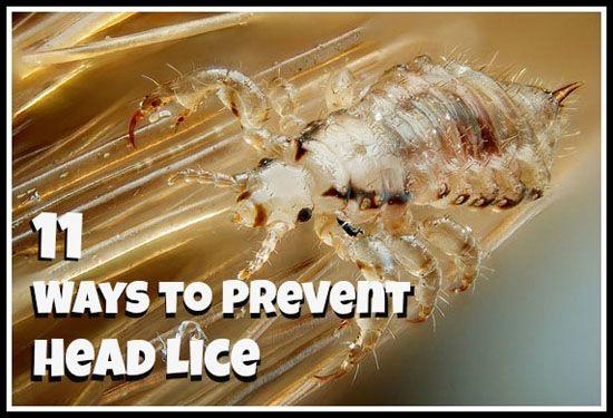11 Ways to Prevent Head Lice -------Lice are repelled by certain smells, like tea tree oil, menthol, eucalyptus oil, lavender oil, rosemary oil, lemongrass, and citronella------- @Krista McNamara McNamara Lahaye Perrine Krohn