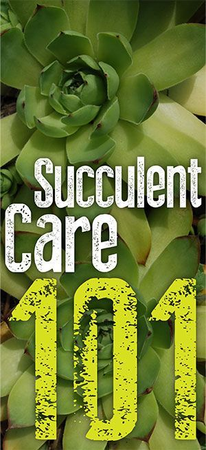 Succulent Care 101 - Infinity Lawn & Garden