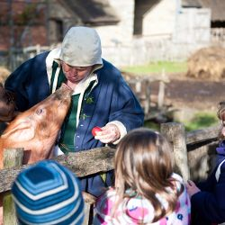 Mary Ardens Farm - Stratford upon Avon (Organic farm visits)