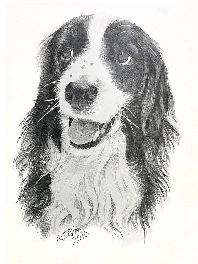 Another Christmas present, this time a dog drawing of a long haired collie. Here's the testimonial the pleased recipient sent me … Hello I just personally want to thank you for the wonderful portrait you did of our beautiful dog Toby. You are extremely talented and everyone I have shown it too have commented on…