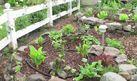 How To Fertilize A Garden With Epsom Salts Tomato Garden 640 x 480