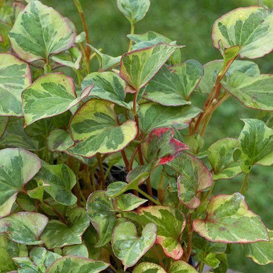 8 Best Plants For Wet Soil Images On Pinterest Flower