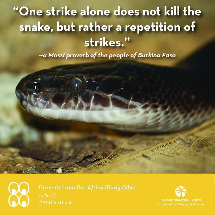 "A Proverb from Luke 18:1-5 of the Africa Study Bible: Wẽ-yɛng ka kʋʋd waaf ye, meaning, ""One strike alone does not kill the snake, but rather a repetition of strikes."" ••• ""The ""snake"" represents any subject or situation that requires steadfastness to 'strike it' repeatedly through prayer—no matter what difficulty or delay may be involved. Jesus' stories were brief in length and full of meaning. In the story of the persistent widow, the judge did not fear God or care about people. Jesus'…"