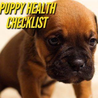 puppy health checklist