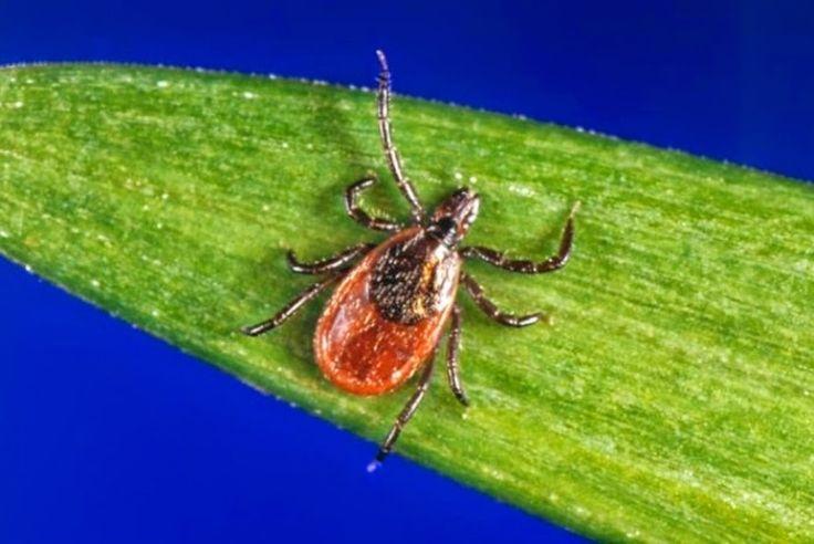 Vírus misterioso intriga cientistas nos Estados Unidos   EpHuman