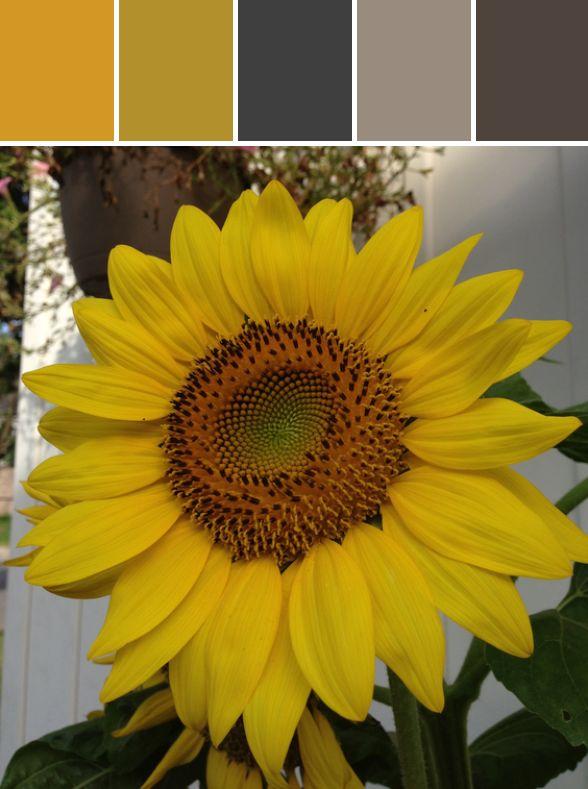 Sunflower Designed By Colleen M Cole via Stylyze #colourpalettesilove