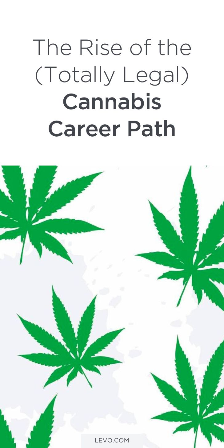 Job Seekers: Are You Open To Starting A Career In Cannabis? This Article  Breaks