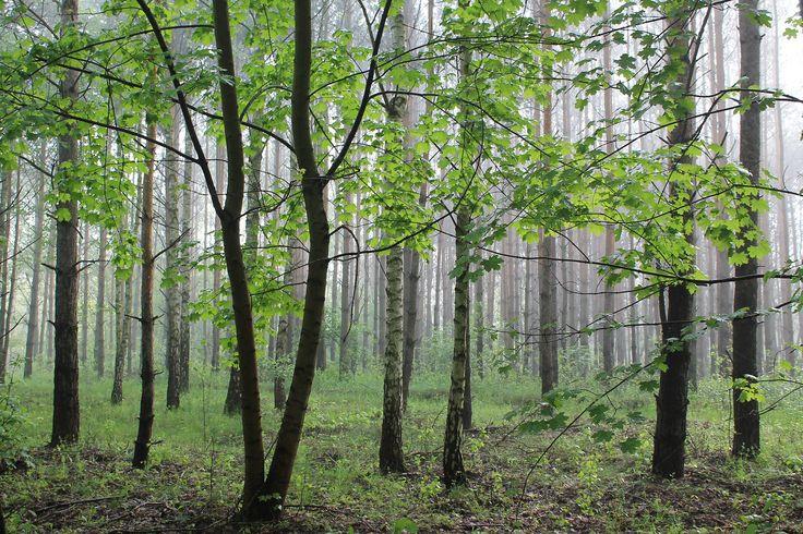 Kampinoski NP, Mazowsze, Poland | by LeszekZadlo