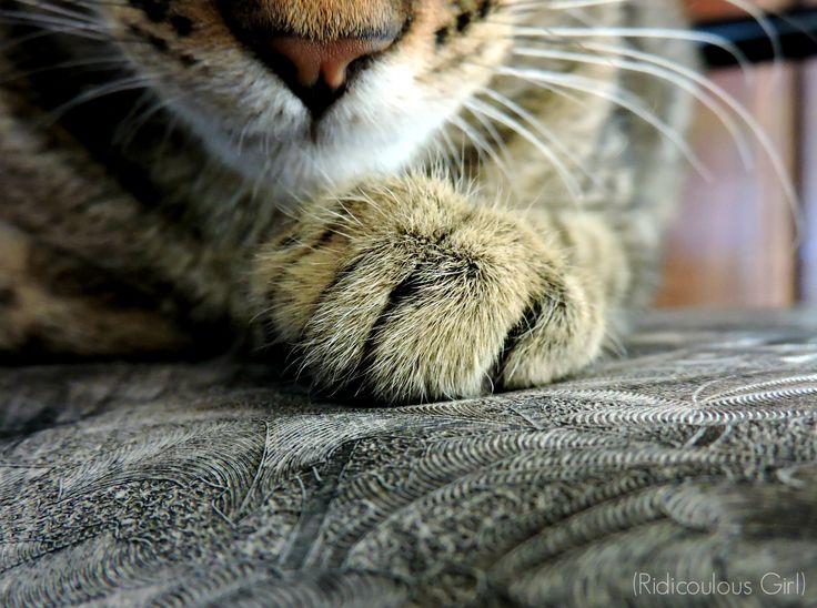 #Cat #Paws
