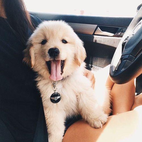 grafika dog, cute, and puppy