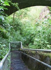 Wülfrath-Bochumer Bruch . die Natur kehrt zurück (1)