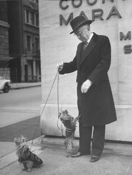 William F. Schlemmer of Hammacher Schlemmer, with his pair of Yorkshire terriers on street. April 1944. LIFE Magazine: Photosvintag Dogs, Puppies, April 1944, Yorkshire Terrier, Pin Today, Photos Vintage Dogs, Pairings, Life Magazine, Hammacher Schlemmer