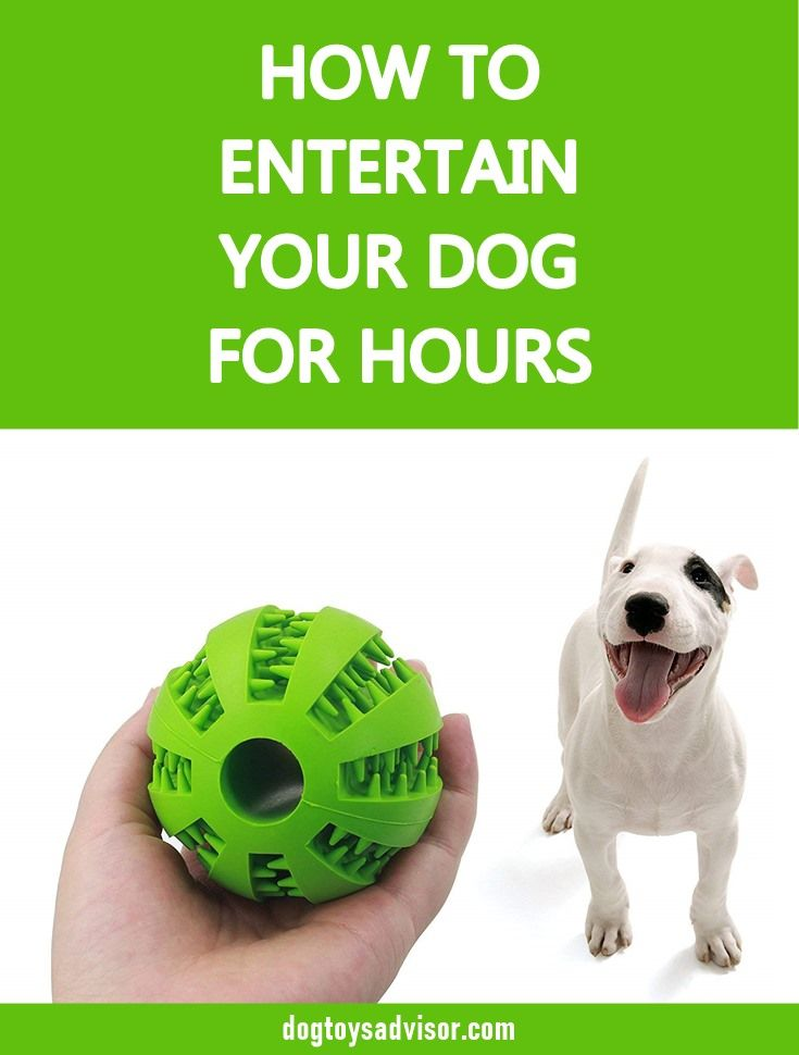 Is Your Dog Bored Here S Some Games Indoor Activities And Toys