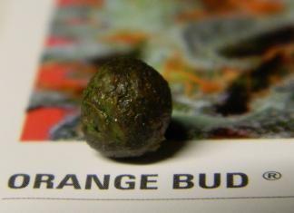 Orange Bud grow/smoke review by Cannabis King