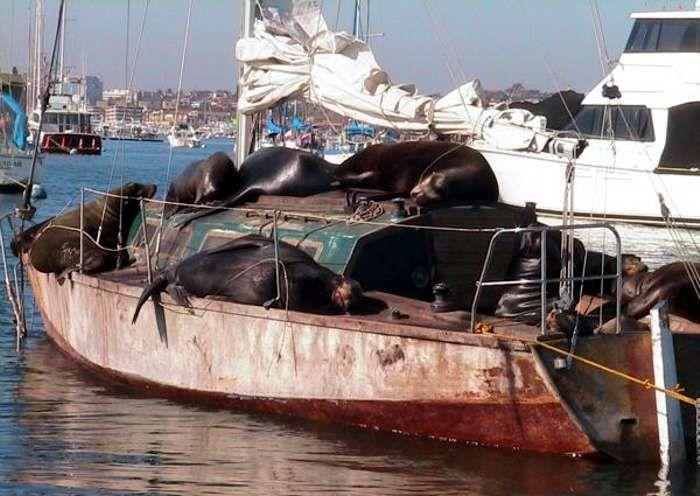 El problema de los #barcos abandonados