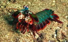 crustaceans - Google Search