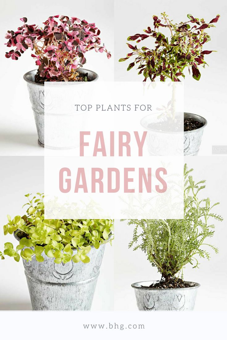 Add some magic to your home decor or yard by creating a miniature fairy garden or terrarium. We take the guesswork out of which plants to use with our helpful guide. Here are 21 of the best plants to use for your miniature fairy or terrarium garden. #minigardens #fairygardens #terrariums